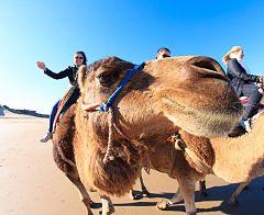 Paseo en camello por la playa