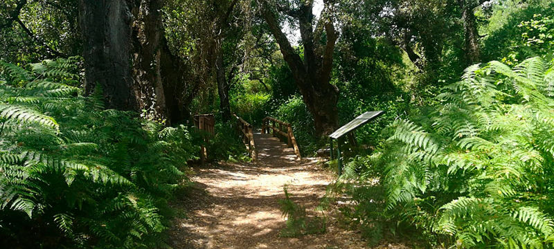 Ruta Guiada Camino de Moguer a El Rocío 200119