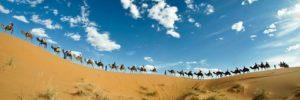 sahara viaje camello